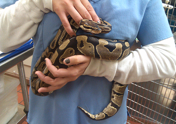 Exotic Snake Veterinary Care, Levittown